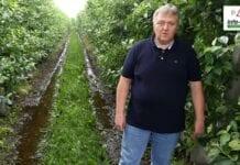 Sady po ulewnych deszczach – komunikat sadowniczy Agrosimex z dnia 25.06.2020