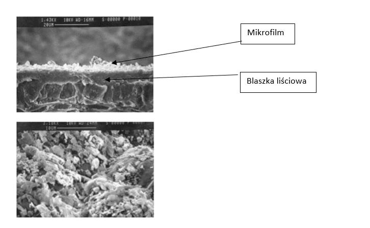 Fot. 1 i fot. 2. Zdjęcia spod mikroskopu elektronowego pokazujący mikrofilm z zeolitu na powierzchni liści. Źródło: Particle Films: A New Technology for Agriculture, Michael Glenn, 2005