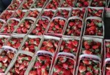 Hurtowa sprzedaż truskawek nabiera tempa