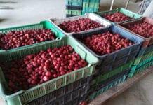 Trudny sezon truskawkowy dobiega końca