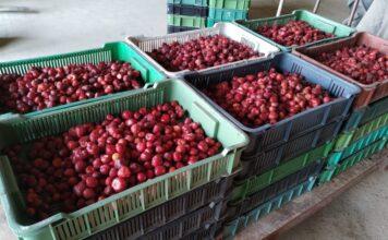 ceny truskawek na mrozenie
