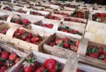 Ceny truskawek w hurcie – Bronisze, 18.06.2020
