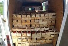Kolejna kradzież truskawek z plantacji!