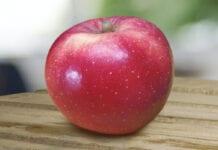 nowa odmiana jabłek