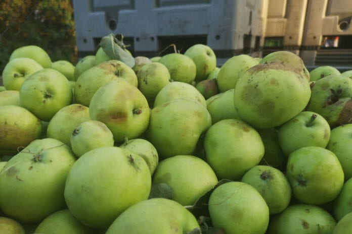 ceny jablek z przerywki