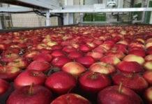 ceny jabłek w tyrolu