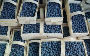 ceny owoców