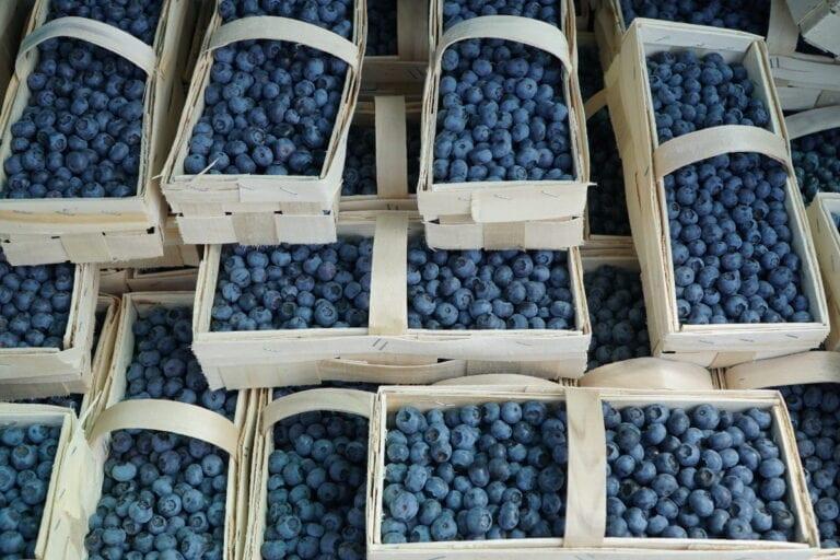 Cennik owoców miękkich u pośredników – 14 lipca 2020
