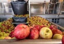 Wójt gminy Łoniów pyta zakład Doehler w Jasienicy, dlaczego nie skupuje jabłek