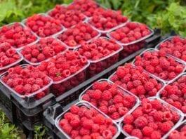 ceny owoców miękkich
