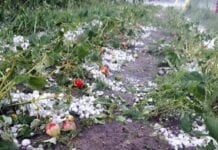 plantacje truskawek 2020