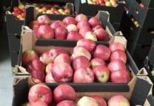 jablka market