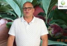 Komunikat sadowniczy PROCAM 16 z 08.07.2020