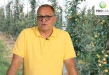 Komunikat sadowniczy PROCAM 17 z 22.07.2020
