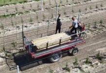 platforma sadownicza na ursusie c330