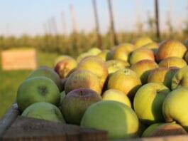 jabłka z przerywki ceny 2020
