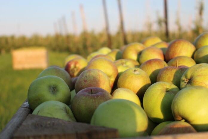 jabłka z przerywki ceny 2021