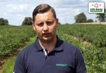 Program nawożenia i fertygacji borówki – komunikat jagodowy Agrosimex, 28.07.2020