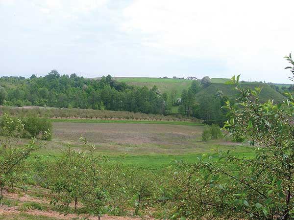 Fot. 3. Zakładając sad należy uwzględnić położenie działki, jej odległość od wzniesień i zarośli