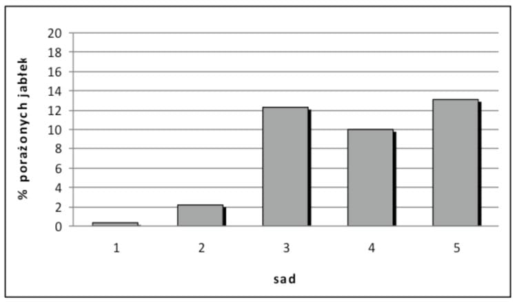 Rys. 3. Występowanie szarej pleśni na jabłkach odmiany 'Ligol'