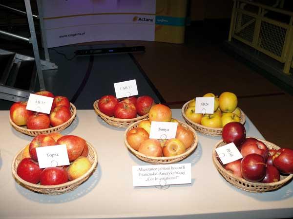 Fot. 1. Nowe odmiany jabłoni na wystawie