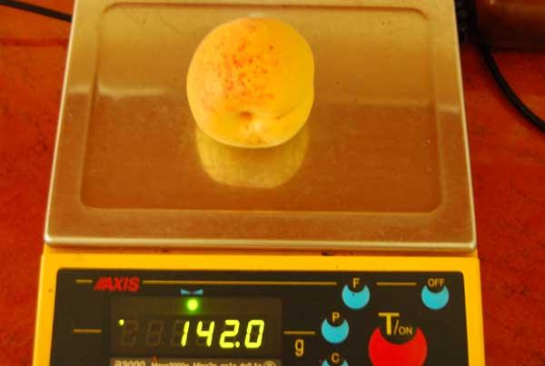 Fot. 7. Pojedyncze owoce odmiany 'Pietropawłowskij' osiągają masę 140 g