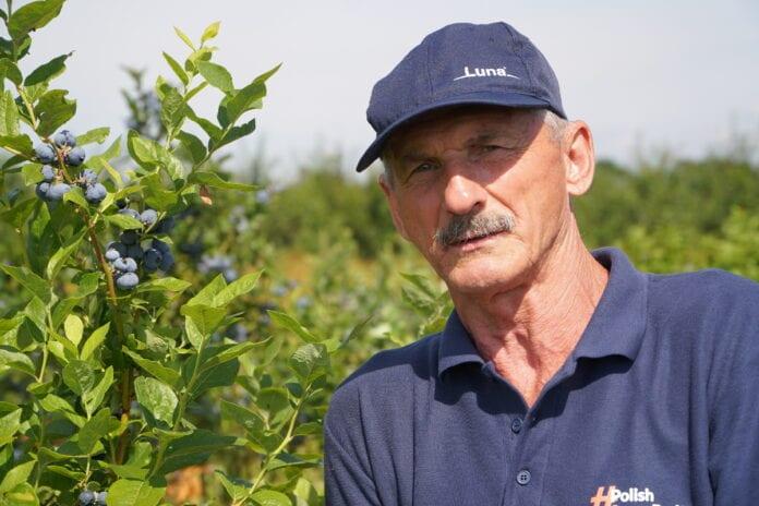 polecane odmiany borówki