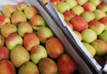 jabłka deserowe na rynku hurtowym