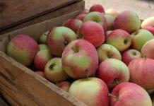 ceny jabłek deserowych 2020