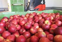 Ceny jabłek 2020: Czemu media prorokują spadki?