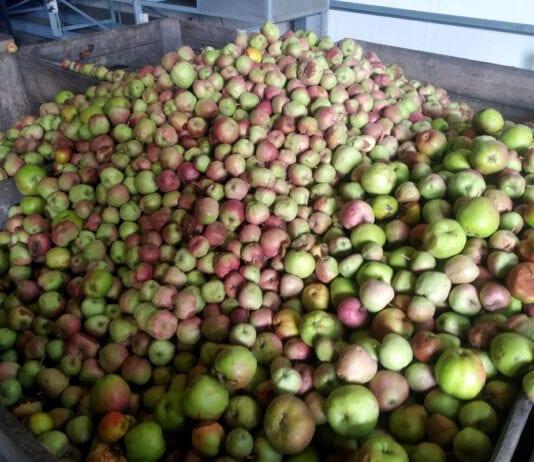 Ceny jabłek przemysłowych 2020: Stawki już blisko 60 groszy