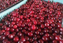 Zmowa cenowa na rynku wiśni?