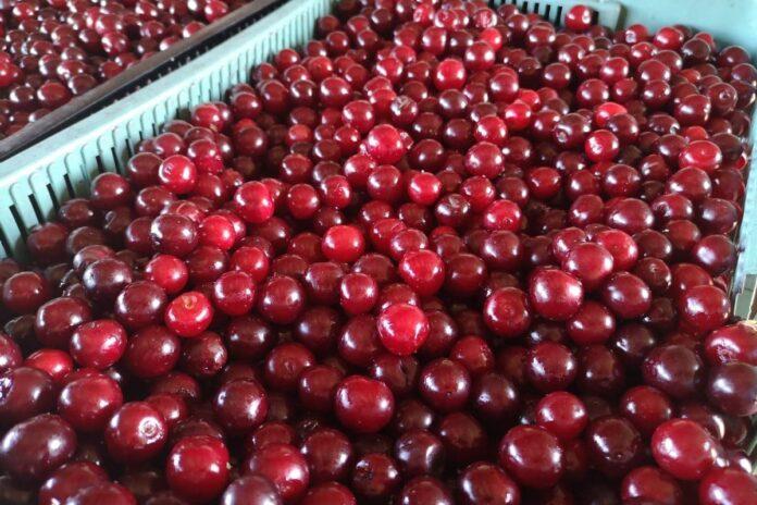 zmowa cenowa na rynku wiśni