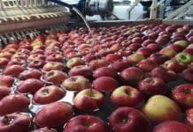 grupa producentów owoców i warzyw