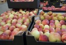ceny jablek
