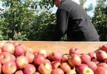 Minister apeluje o przestrzeganie wytycznych w gospodarstwach!