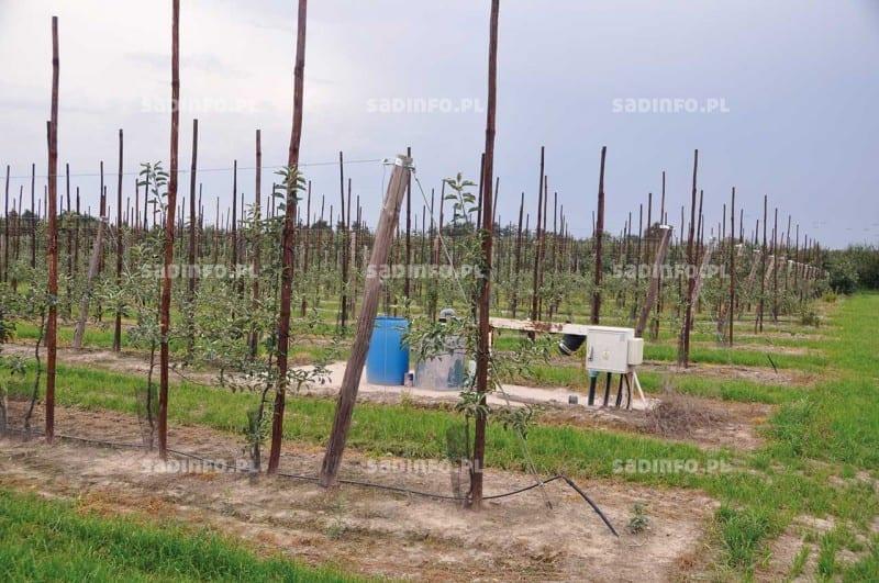 FOT. 14b. Do stabilizowania drzewek w rzędach mogą być wykorzystane drewniane paliki