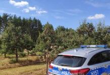 Powiat grójecki: Złodzieje ukradli około 2 ton jabłek z sadu