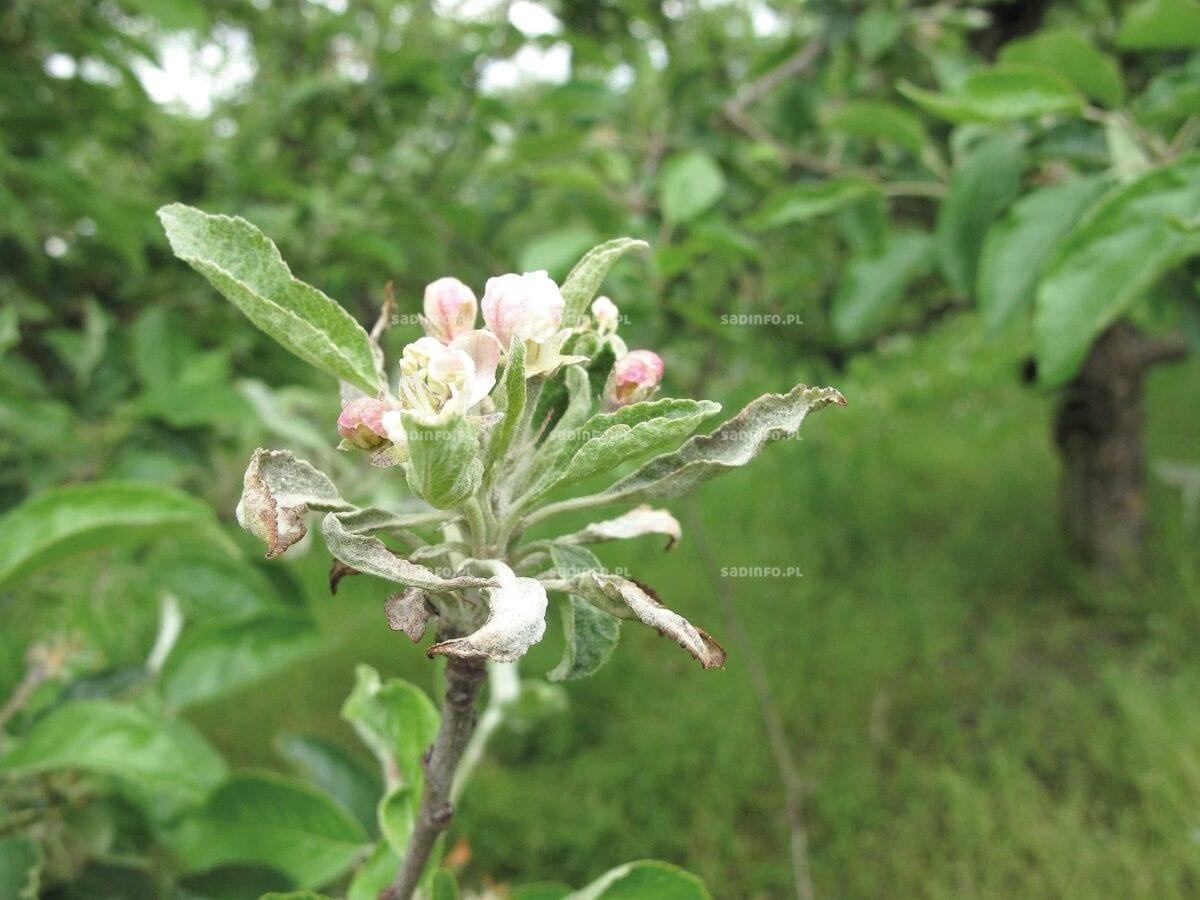 FOT. 2. …i kwiatowych