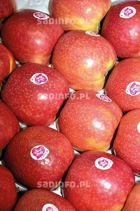 Fot. 4. 'Cripps Pink'/Pink Lady®