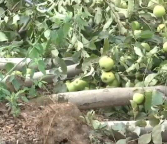 Dotkliwe straty po burzach w Serbii