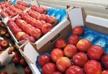 przygotowanie jabłek do sprzedaży