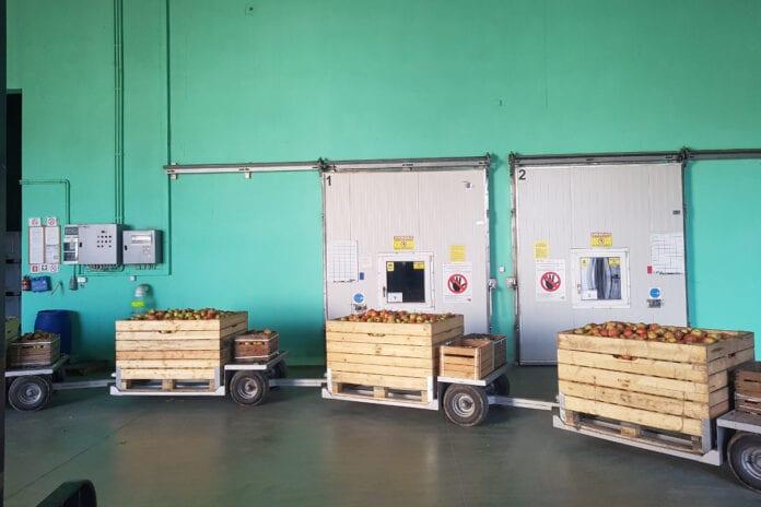 ceny jablek 2020