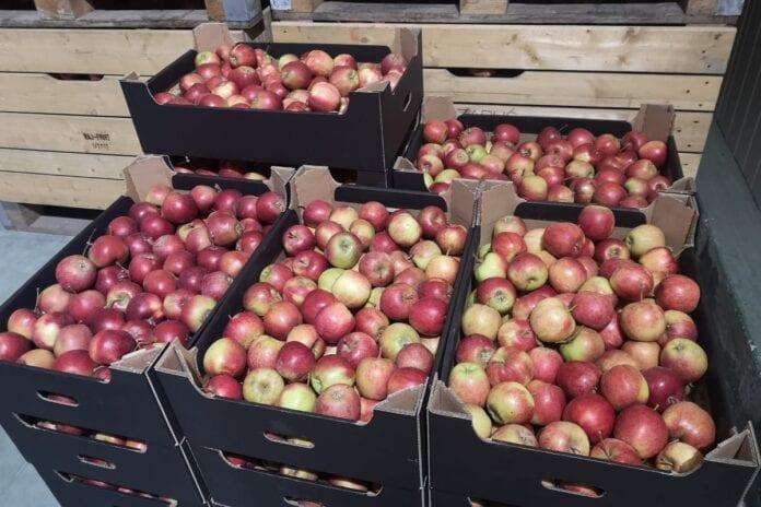 jabłka w mołdawii