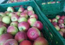 ceny jablek deserowych 2020