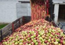 Stabilna cena koncentratu – niestabilne ceny jabłek przemysłowych