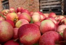 ceny jabłek przemyslowych 2020