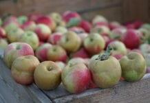 Gala ceny jabłek na soki