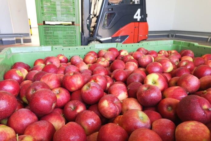 jablka w skrzyniach