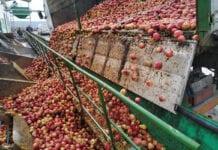 ceny jabłek przemysłowych 2020